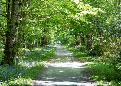 bridgend-woods
